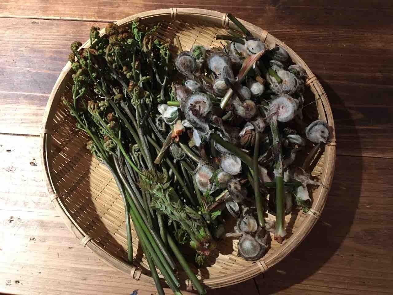 採ってきた山菜たち