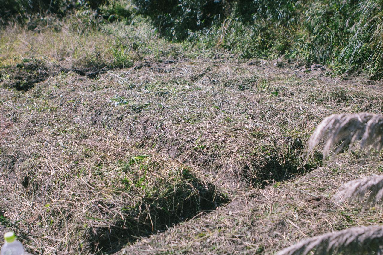 畝立て後に刈った草をかけた状態