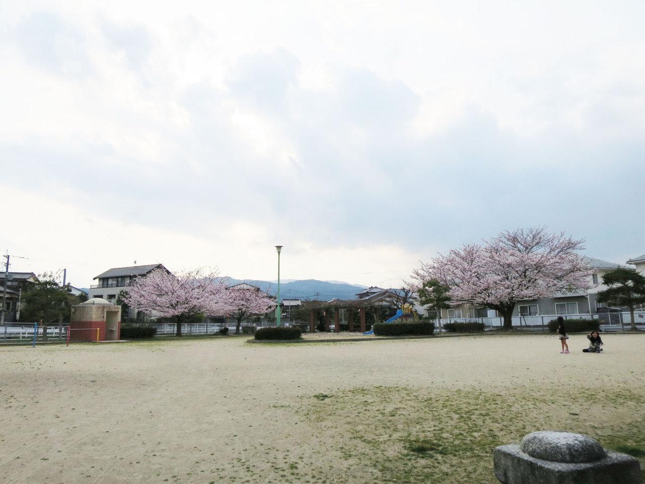 那珂川町の前田公園の桜