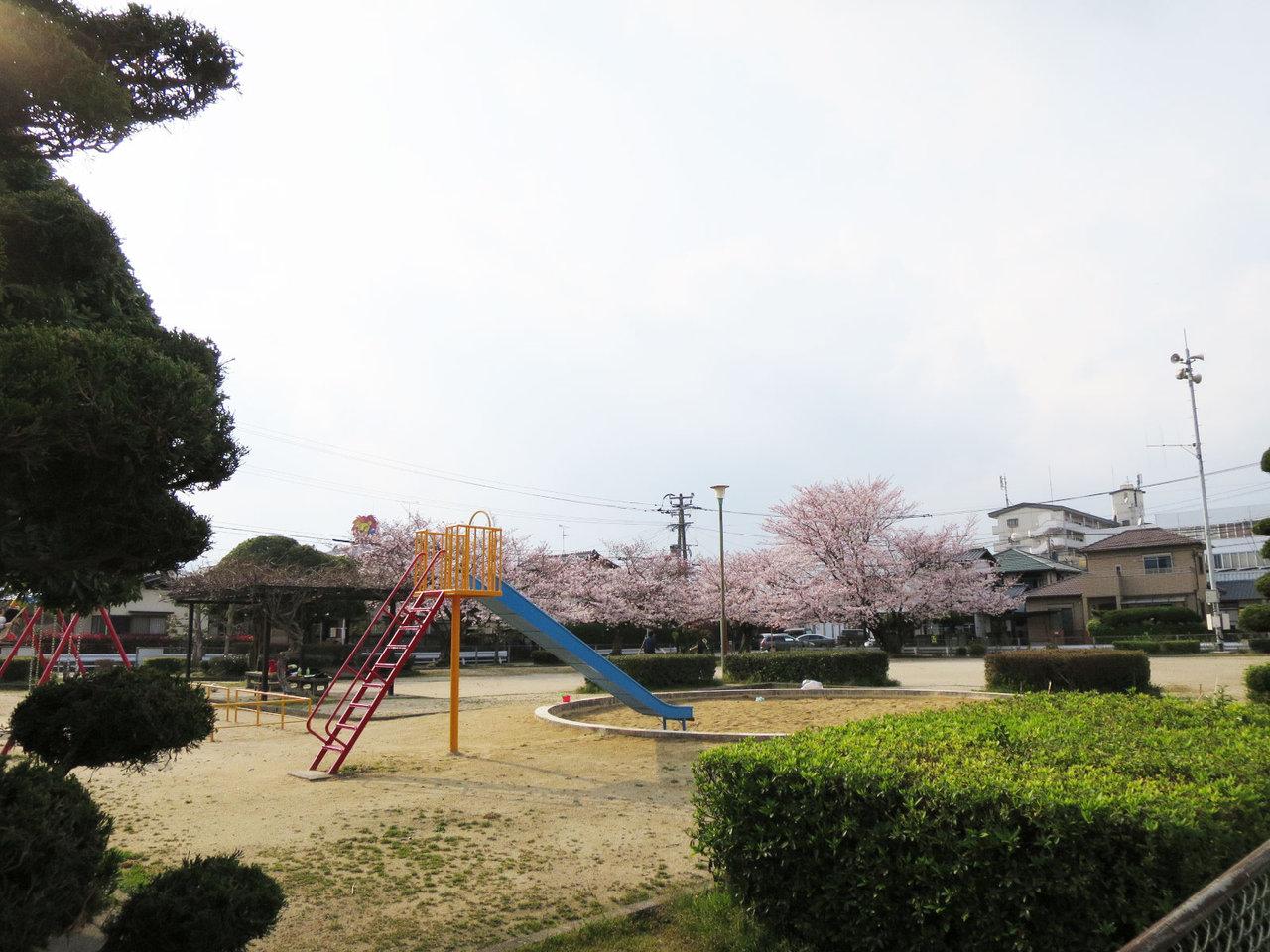 那珂川町の鷹取公園の桜