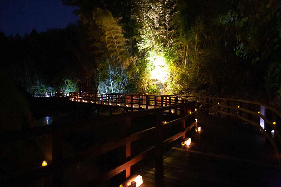 カワセミ公園近くの木道のライトアップ