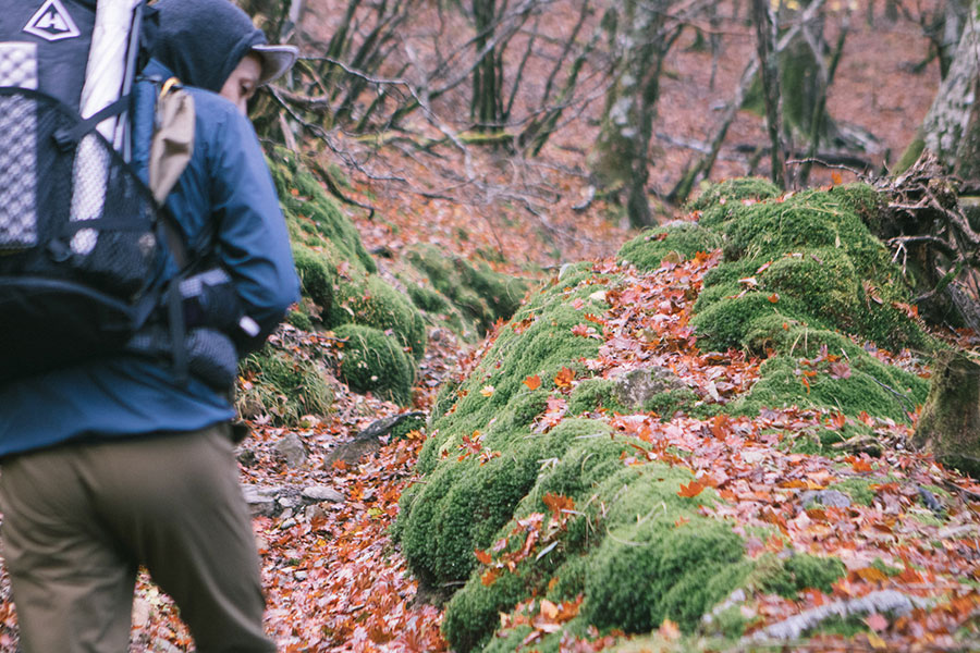 苔と落ち葉のトレイル