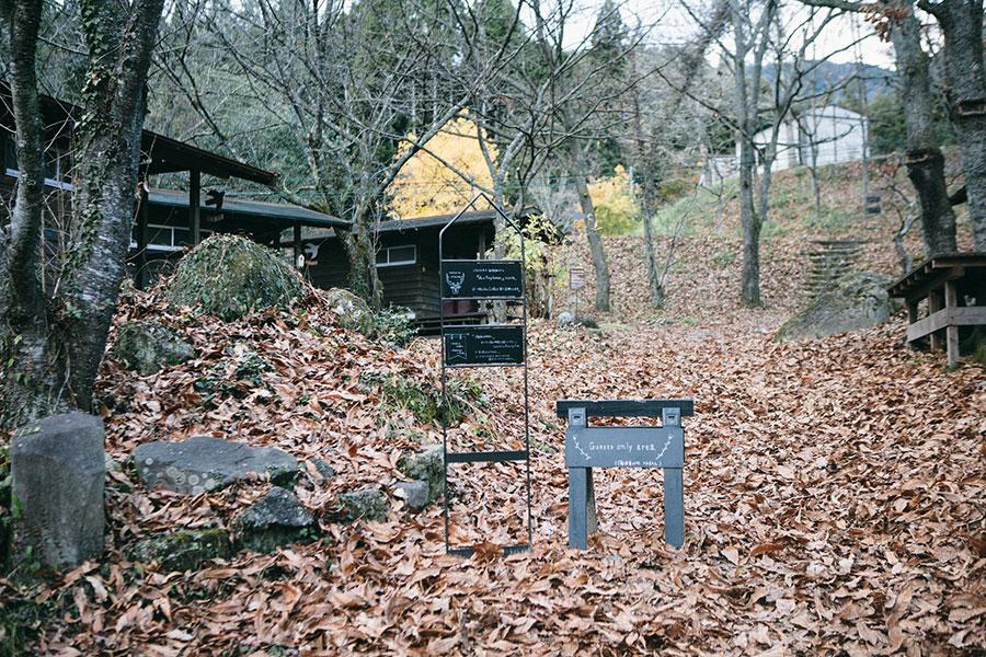 この時期の森は落ち葉でフカフカ