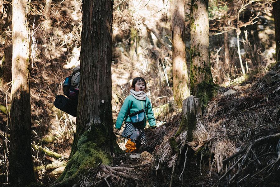 序盤は勾配きつめの樹林帯を歩く
