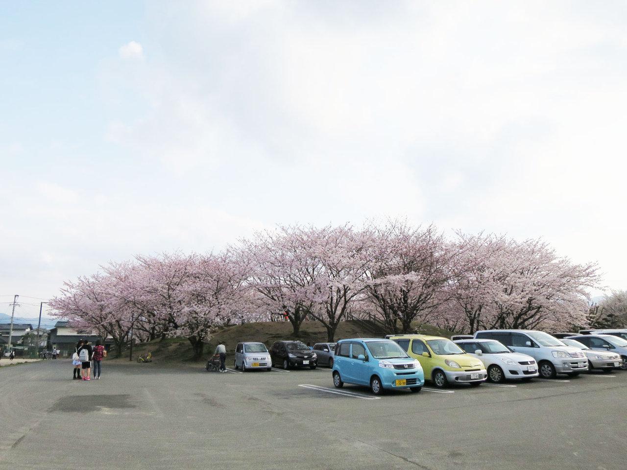 那珂川町の安徳公園の桜1