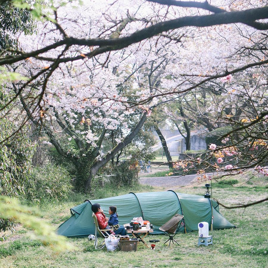 桜の下に設営