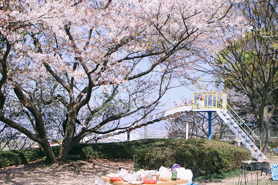 桜満開の遊具広場1