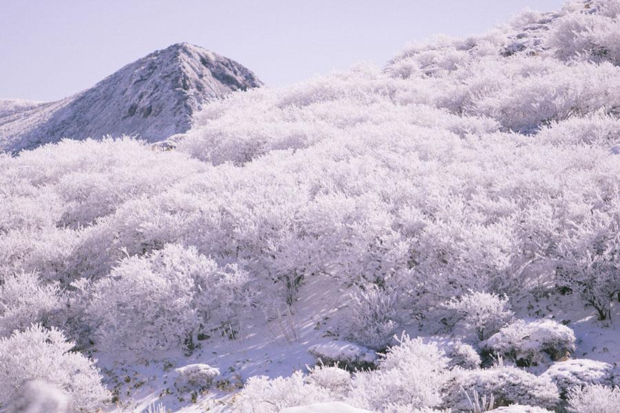 厳冬期の久住山