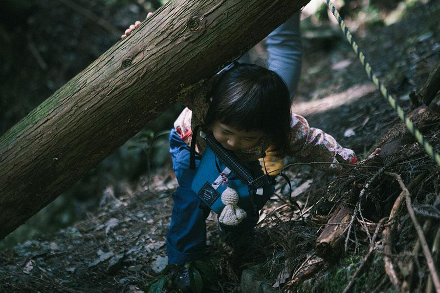 倒木をくぐったり