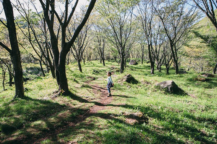 ピクニックにも良さそうな山桜の森