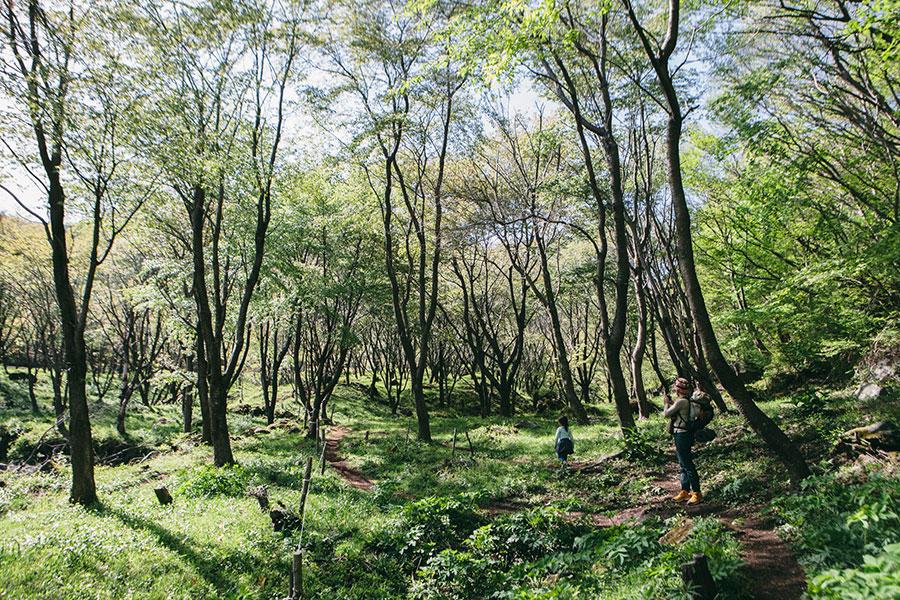 山桜の森に到着