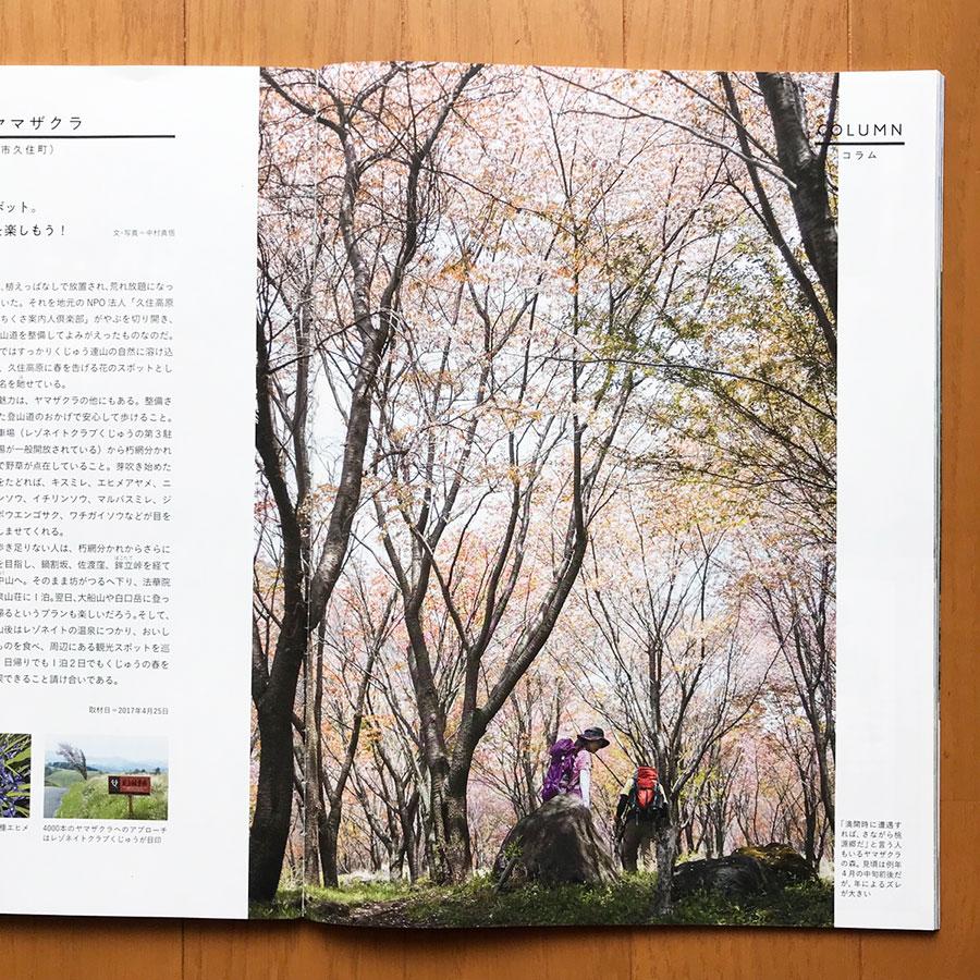 朽網分かれの4000本桜(noboro)
