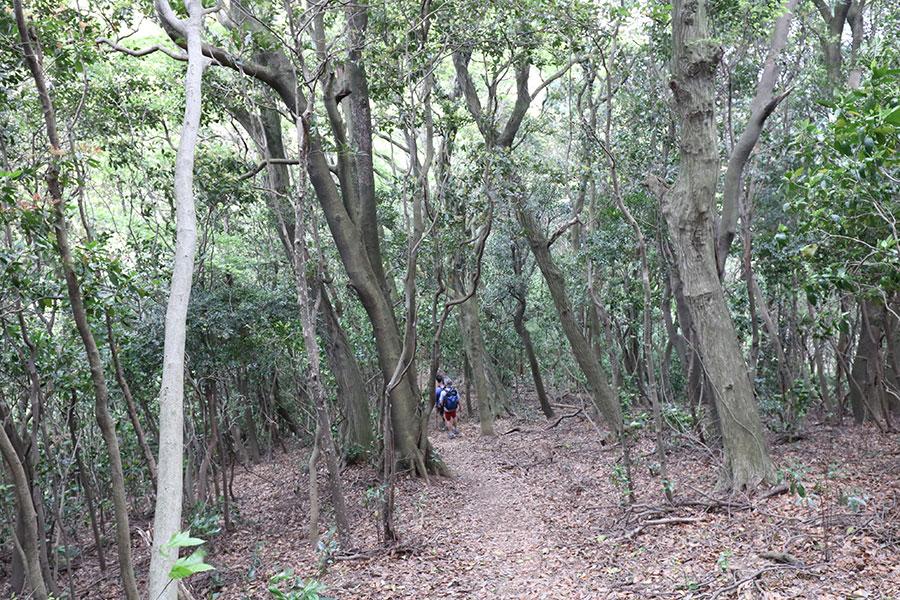 樹林帯の長い下りが続く