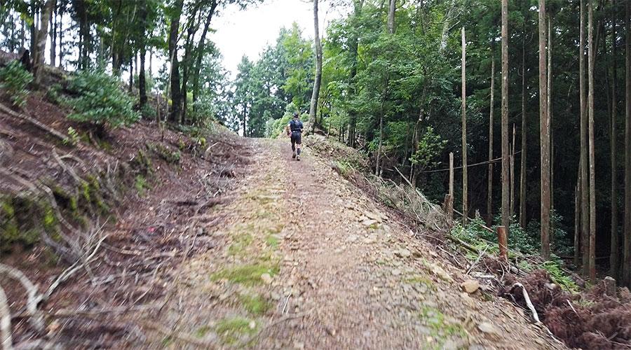急登の後の林道