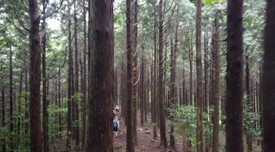 楽しいはずの樹林帯